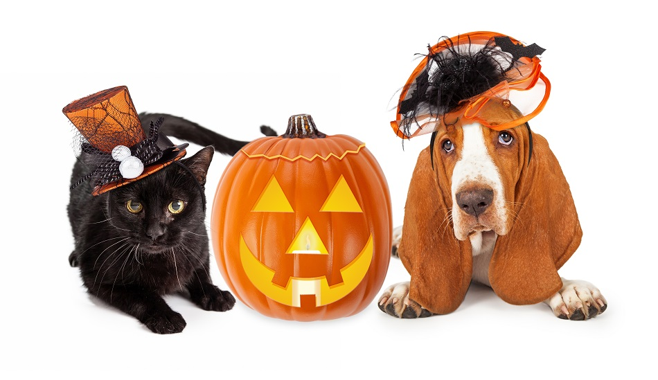 Tails from the Crypt: Halloween Pet Emergencies