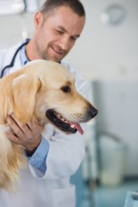 Seizures in Pets