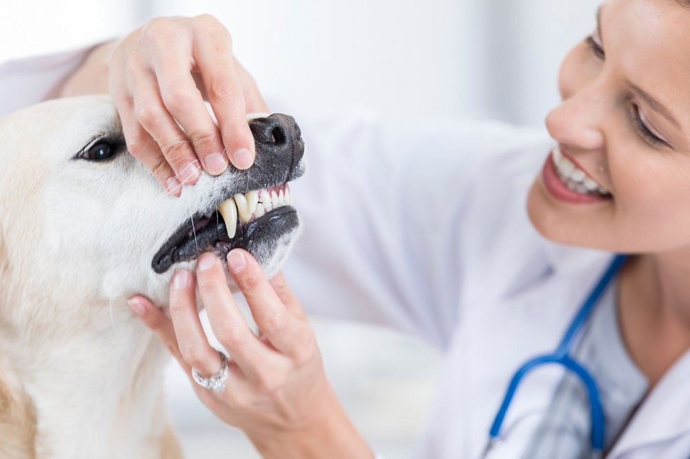 Root Canal Therapy for Pets